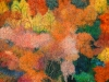 autumn-magic-ii-818x818-818x818
