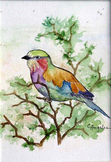 bird-of-colors