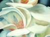 magnolias-326x497